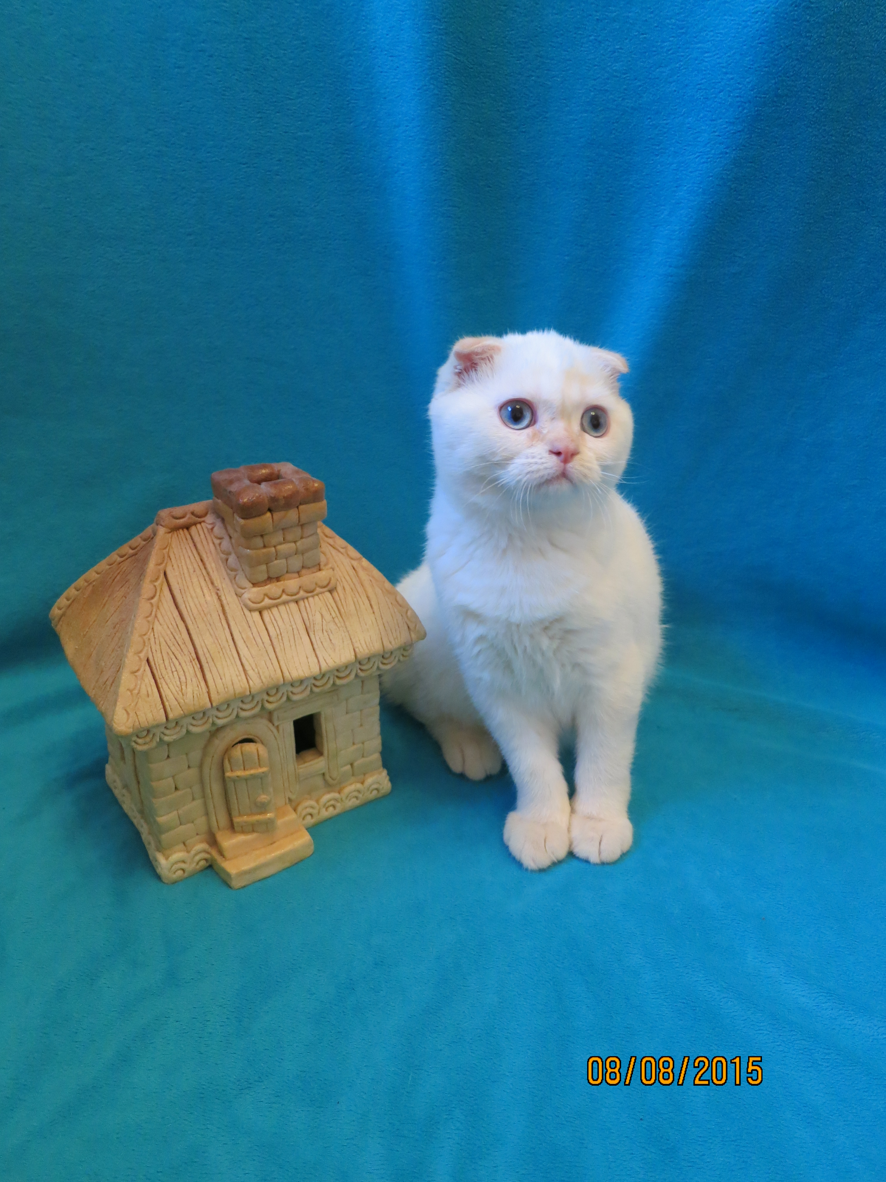 http://belfastcats.ucoz.net/IMG_2167.jpg