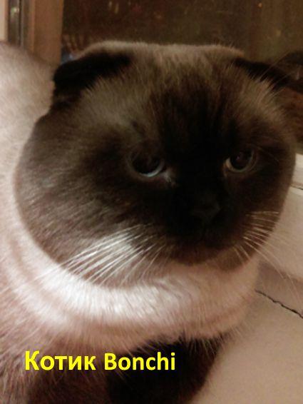 http://belfastcats.ucoz.net/bonchi.jpg