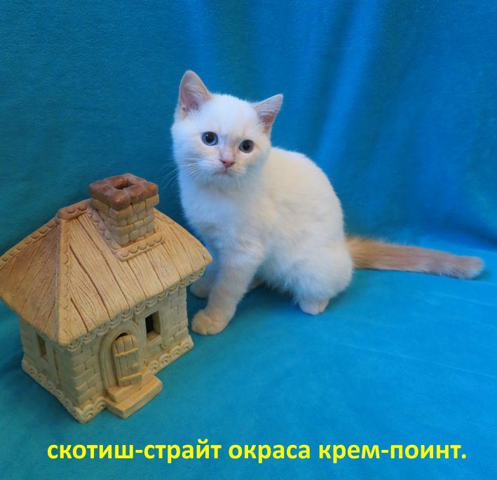 http://belfastcats.ucoz.net/creme.jpg