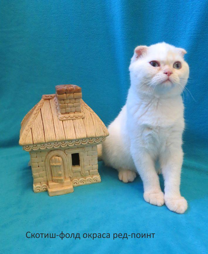 http://belfastcats.ucoz.net/hercul.jpg