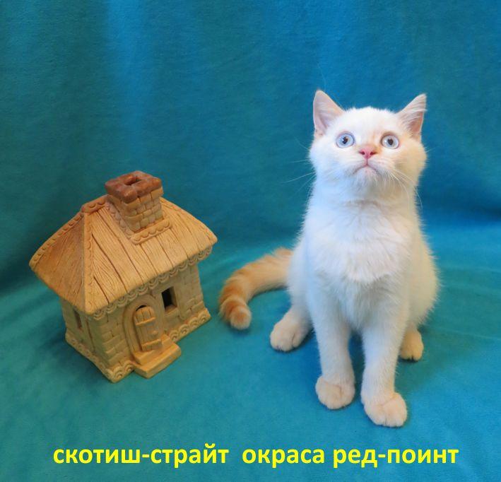 http://belfastcats.ucoz.net/red.jpg